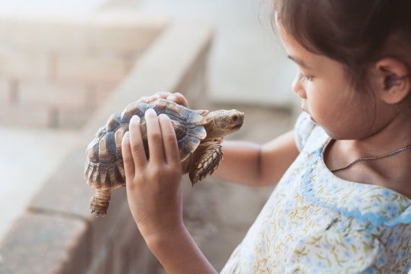 children five years of age and younger should not have pet reptiles